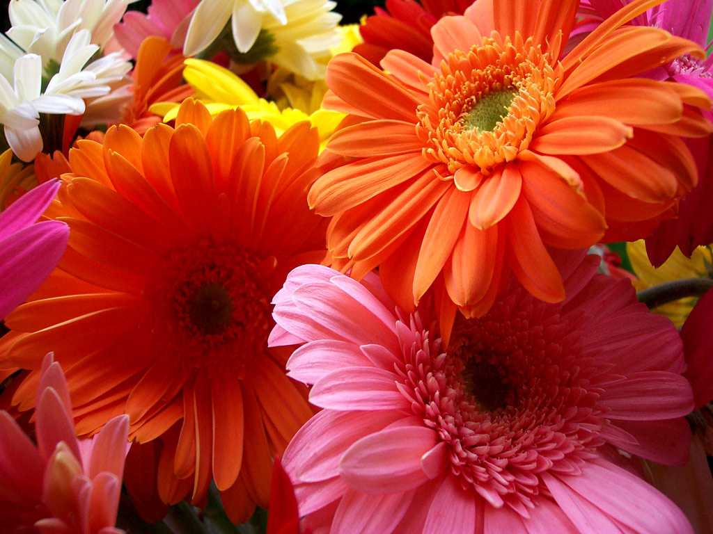 beautiful flower wallpapers beautiful flowers beautiful flowers ...