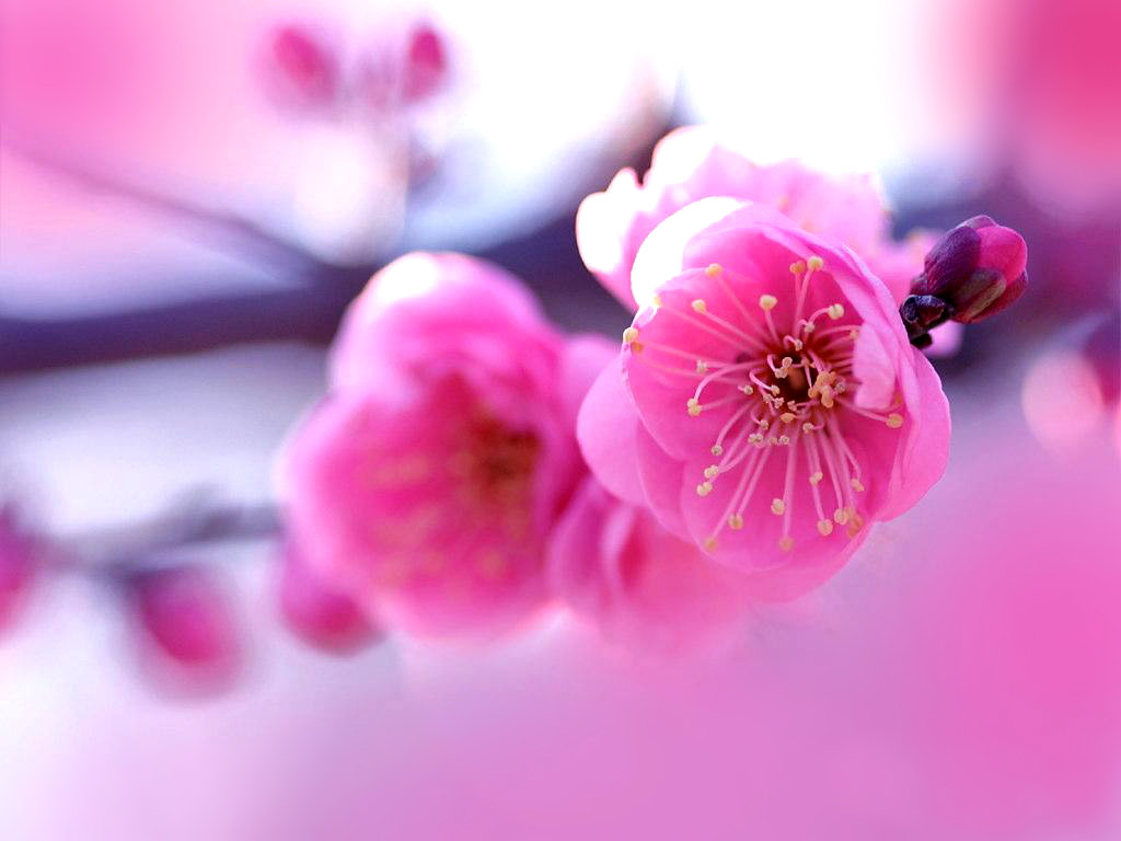 Pink Flower Desktop