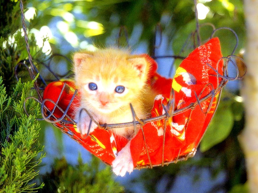 Klein poesje wallpaper - Kittens Desktop - Cats ... Wallpapers Bureaublad
