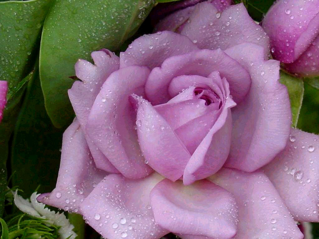 Flowers Bloemen Desktop P9