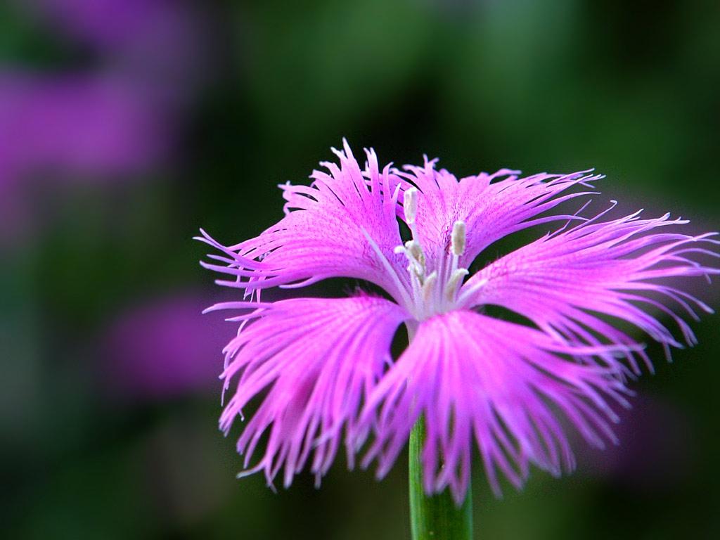 Pin by Norma Jonkers on Bijzondere bloemen/Special flowers ...