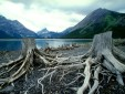 Alberta Canada Driftwood Picture.