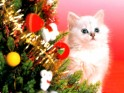 Christmas Cats wallpapers.