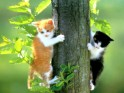 Kittens in tree.